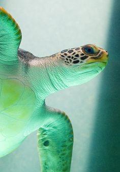 Turtle Reserve in Mazunte, Mexico