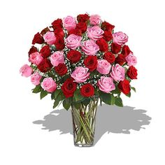 Long Stem Pink  Red Roses in Stylish Look *** Check this awesome product by going to the link at the image.