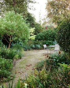 Gravel has replaced lawn in this garden, making for a low maintenance, less water hungry garden. The outdoor setting provides the perfect spot for summer meals in the garden. The Chinese tallow tree (Sapium sebiferum), to the left of the gravel area, will grow to provide summer shade and autumn colour. Production – Lucy Feagins/The Design Files and Georgina Reid/The Planthunter.
