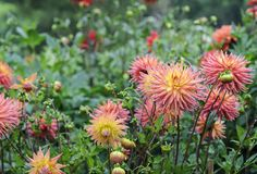 The September checklist:  Autumn is coming so it's time to deadhead flowers, harvest fruit, watch over your seeds & get planting. --- I like to leave some flower heads on the self-seeders, so there will be surprises in the spring - rueth .