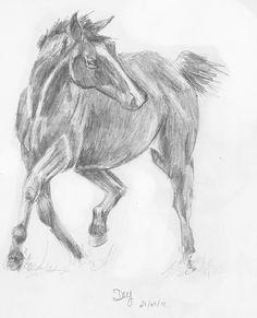 Pencil Art Gallery | Horse Pencil Drawing Pencil sketch of costa the