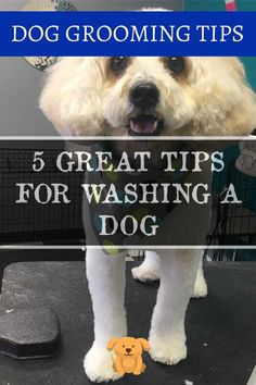 Taking Care of Your Pet - Dog Grooming Tips * Read more at the image link. Puppy Shampoo, Dog Grooming Tips, Dog Wash, Pet Dogs, Pets, Your Pet, Image Link, Cleaning, Puppies