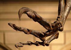 Allosaurus claws