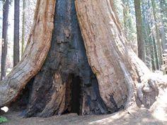 Sequoia National Park | Lugares Fantásticos: Sequoia National Park – Califórnia