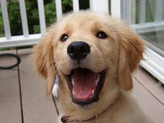FREE DEMO: How to draw dogs -- www.DrawPETS101.com