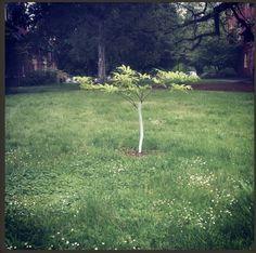 The Lonely Tree  Photo by Alexandra Marga