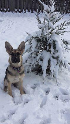 Ellie's first snowfall - Imgur