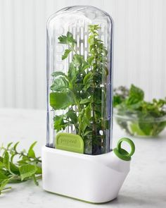 Herb Saver  $29.95 @ Williams Sonoma -   Keep fresh herbs at their peak for weeks with this innovative storage device. It's laboratory-tested to make sure leafy green herbs stay fresh and flavorful for up to three weeks. Just fill the base with water, place your herbs in the basket and store in the fridge.  Sleek and compact design fits inside your refrigerator door.  Removable stainless-steel herb basket keeps herbs neatly arranged.  Herb stems are slightly submerged in water to prolong fre...