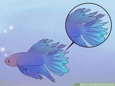 Fish Care Tips...  Cure Betta Fish Diseases