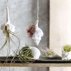 I'm going to do this with the next Tillandsia I see laying on the ground.  Super cute and creative.  I especially like the hanging shells. I could hang a few in different levels from the curtain rod.