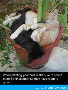 When planting your cats...