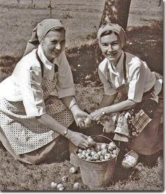 Sr. Rosaline and Sr. Clare picking apples for the Tuesday Apple Party