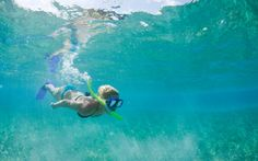 What To Do In Antigua   Snorkeling in Antigua : Shore Excursions, Tours & Activities, Travel ...