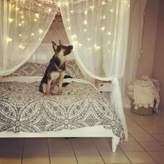 Turn your bed into a relaxing wintry retreat. This Casual Boho Canopy combines laidback style with a snowy color palette to transform your room into a special retreat. Pottery Barn Bedrooms, Pottery Barn Teen, Rustic Bedding, Boho Bedding, Daybed Bedding, Luxury Bedding, Teenage Girl Bedrooms, Girls Bedroom, Bedroom Ideas