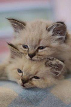 Cuddle Cuteness~Cute Kitty faces~