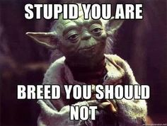 Yoda - Star Wars - Humor. I'm dying.  His facial expression with this. Oh man! hahahahahahah