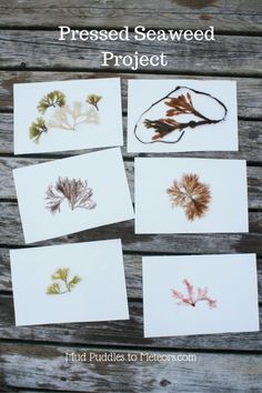 Project: Pressed Seaweed