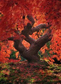 Dragon Tree by Jeremy Cram