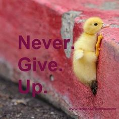 i think i can. I THINK I CAN! ; I KNOW I CAN!!!!!!!!!!!!!