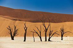 Dead Vlei in Namib Desert Namib Desert, My Images, Deserts, National Parks, Africa, Landscape, Scenery, Postres, Dessert