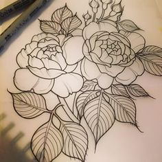 amanda rodriguez roses -