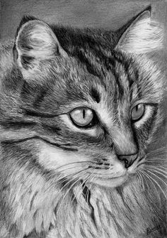 Graphite Pencil drawing of a tabby cat by Celvaya on deviantART
