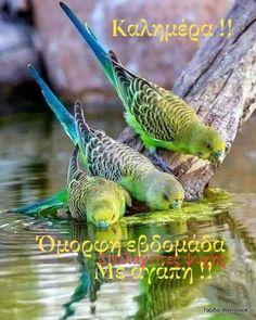 Good Day, Good Morning, N Animals, Beautiful Birds, Twitter, Fish, Instagram Posts, Ankara, Amazing