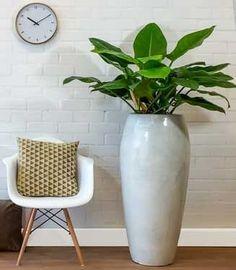 plant in witte pot modern Planter Pots, Green, Plants, Furniture, Pinterest Board, Home Decor, Spaces, Google, Image