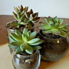 Make your own succulent terrarium centerpiece.