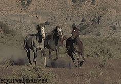 (3) horse gif | Tumblr