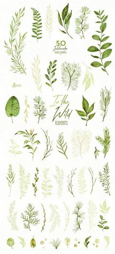 Herbs Clipart Elegant In The Wild 50 Individual Watercolor Floral Elements Leaves - Clip Art Watercolor Leaves, Floral Watercolor, Watercolor Paintings, Watercolor Wedding, Tattoo Watercolor, Watercolour, Watercolor Artists, Watercolor Portraits, Watercolor Landscape