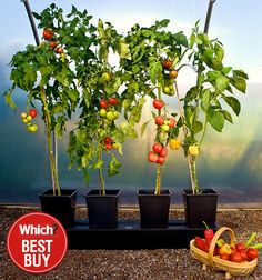 Quadgrow Self-Watering Planters - Bigger Yields compared to growbags & standard pots Tomato Planter, Vegetable Planters, Patio Planters, Wooden Planters, Veg Garden, Garden Oasis, Growing Tomatoes, Growing Vegetables, Prayer Garden