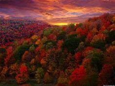 foliage - Bing images