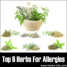10 Best Herbal Remedies for Allergies http://herbsandoilshub.com/6-best-herbal-remedies-for-allergies/  Cathy shares 10 (Not 6 but 10)  natural allergy remedies.