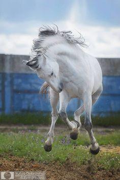 "scarlettjane22: "" Horses & Freedom """
