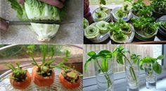 Si crees que cultivar tus propios vegetales puede significar una tarea muy complicada, estos trucos harán que cambies tu percepción.