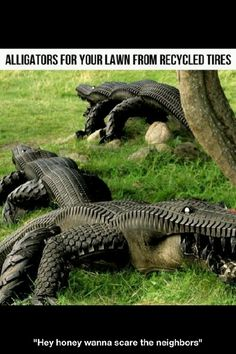 TIRE GATORS !!!!