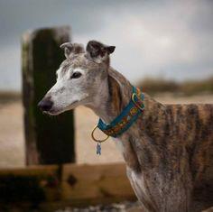 What is she thinking? Gina Greyhound