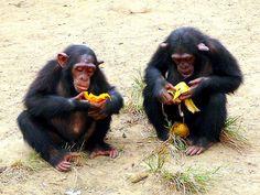 La dieta a través del tiempo   Reflexiones de un primate