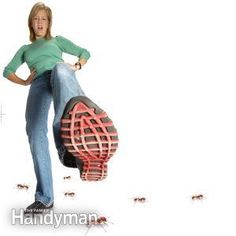 How to Get Rid of Ants: Kill ants in your house and yard (without stepping on them)