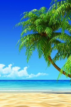 Tropical beach coconut tree illustration iphone 6 iphone 8 plus wallpaper. Strand Wallpaper, Beach Wallpaper, Wallpaper App, Perfect Wallpaper, Beach Images, Beach Pictures, Types Of Photography, Landscape Photography, Tropical Beaches