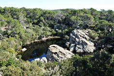 Menorca's Temporary Pond, Sa Bassa Verda - Menorca-Live Green Pond, North Coast, Menorca, Natural Phenomena, Summer Months, Santa Monica, Live, Places, Water