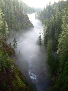 Olympic National Forest, Washington - My soul aches for this world                                                                                                                                                     More