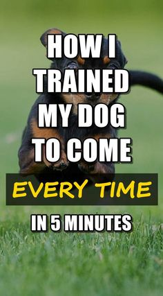 Decisive repaired puppy training you can look here