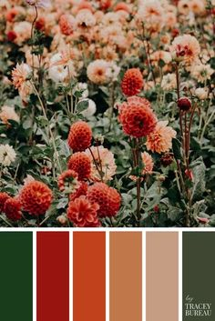 Color Schemes Colour Palettes, Red Colour Palette, Vintage Color Palettes, Fall Color Schemes, Decorating Color Schemes, Vintage Color Schemes, Red Color Combinations, Pantone Colour Palettes, Orange Color Palettes