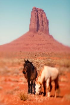 Monument Valley Horses - Zila Longenecker