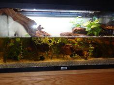 Aménagement aquarium pour cynops pyrrhogaster [finalement pour tylototriton verrucosus] - Page 2
