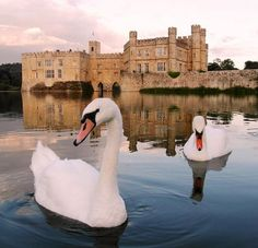 Set in 500 acres of beautiful parkland, Leeds Castle is the perfect backdrop to your day out. http://www.treasurehouses.co.uk/houses/Leeds+Castle …