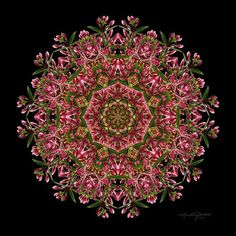 Meditation Art - Red Honeysuckle Flower Mandala - Infinitely Connected by Art #etsy #flowers #mandala