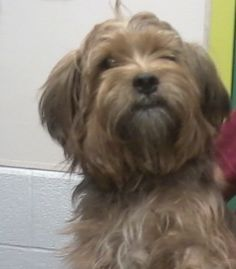 Max is a 2-3 year old Yorkie Mix he weighs 14 pounds and loves to sit on your lap. He also loves to go for car rides. He ignores the other dogs here and also pays no attention to the cats. The last picture is of him before his grooming. Max was a...
